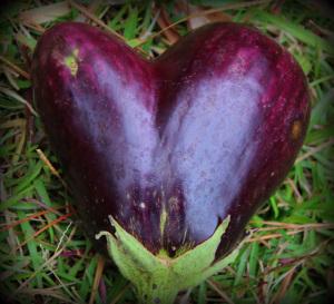 Eggplant Love