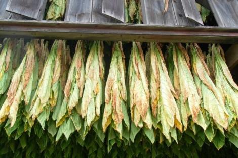 Golden Leaf Wrap